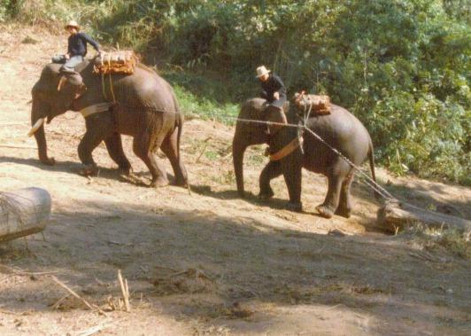 Elephants Hauling Teak, Northern Thailand