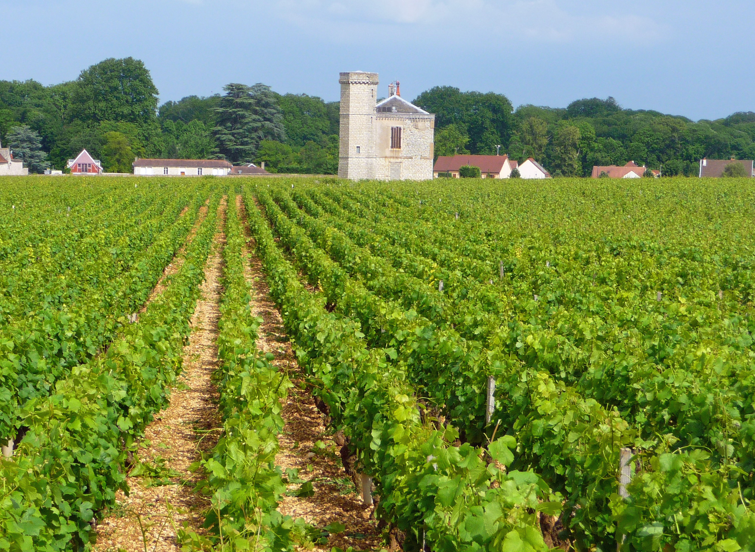 Vineyard in beaune travels with my camera - The splendid transformation of a vineyard in burgundy ...