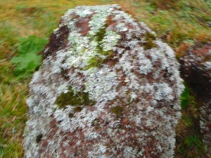 Lichen on Stone in Mountains