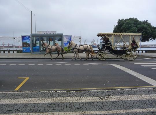 Local Transport, Horse & Carriage in Ponta Delgado