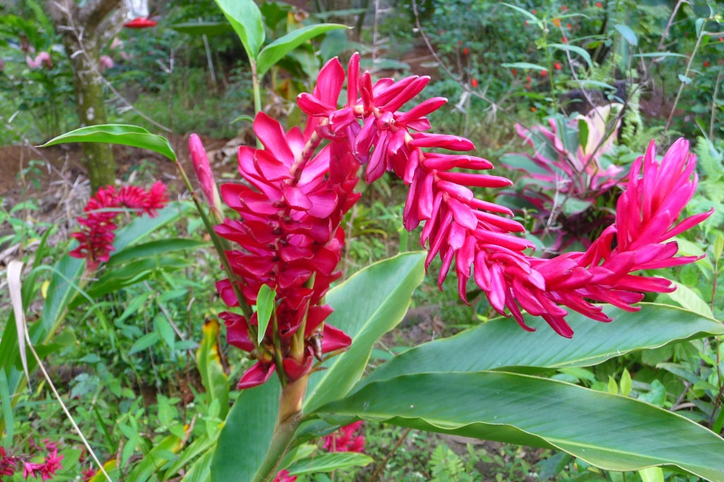 Tropical Blooms in Martinique