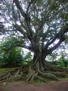 Tree in Botanic Gardens in S. Miguel