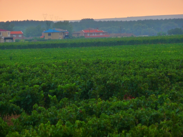 A Pink Dawn Over Rioja