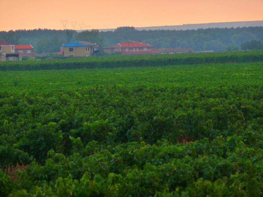 A Pink Dawn Over Rioja
