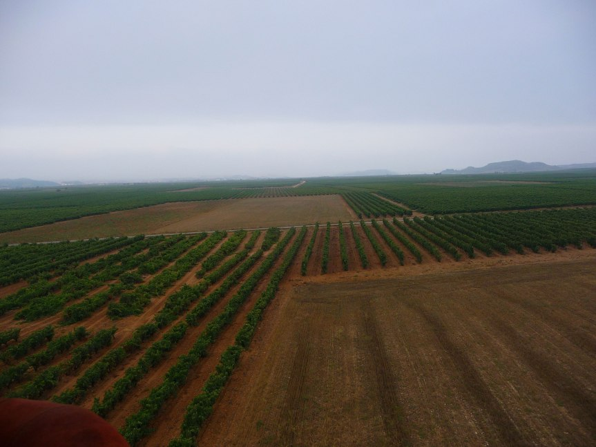Vineyards of the Rioja area