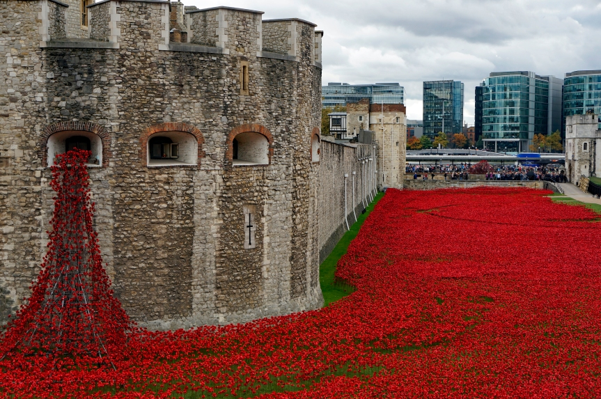 Poppies from arrowslits