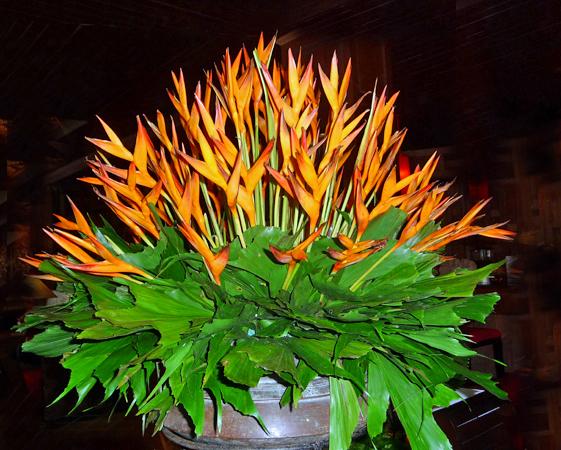 Vibrancy of tropical floweers.jpg