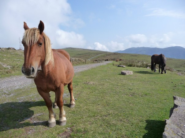 lots-of-ponies-on-the-mount