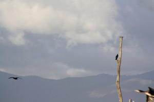 Birdwatching 1
