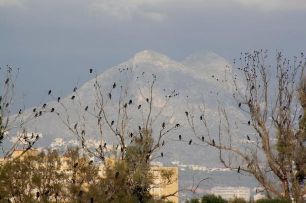 Silver Spain - Birdwatching 2
