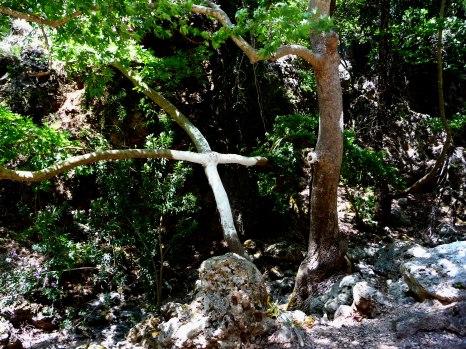 A-Wooden-Cross-along-the-Roadside