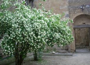 Citiva village