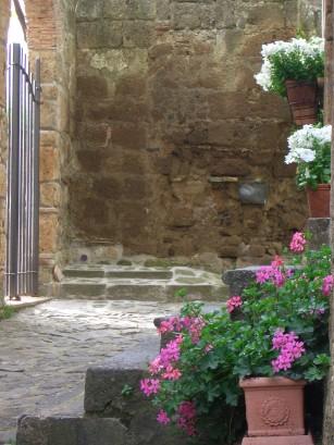 Geraniums in Citiva