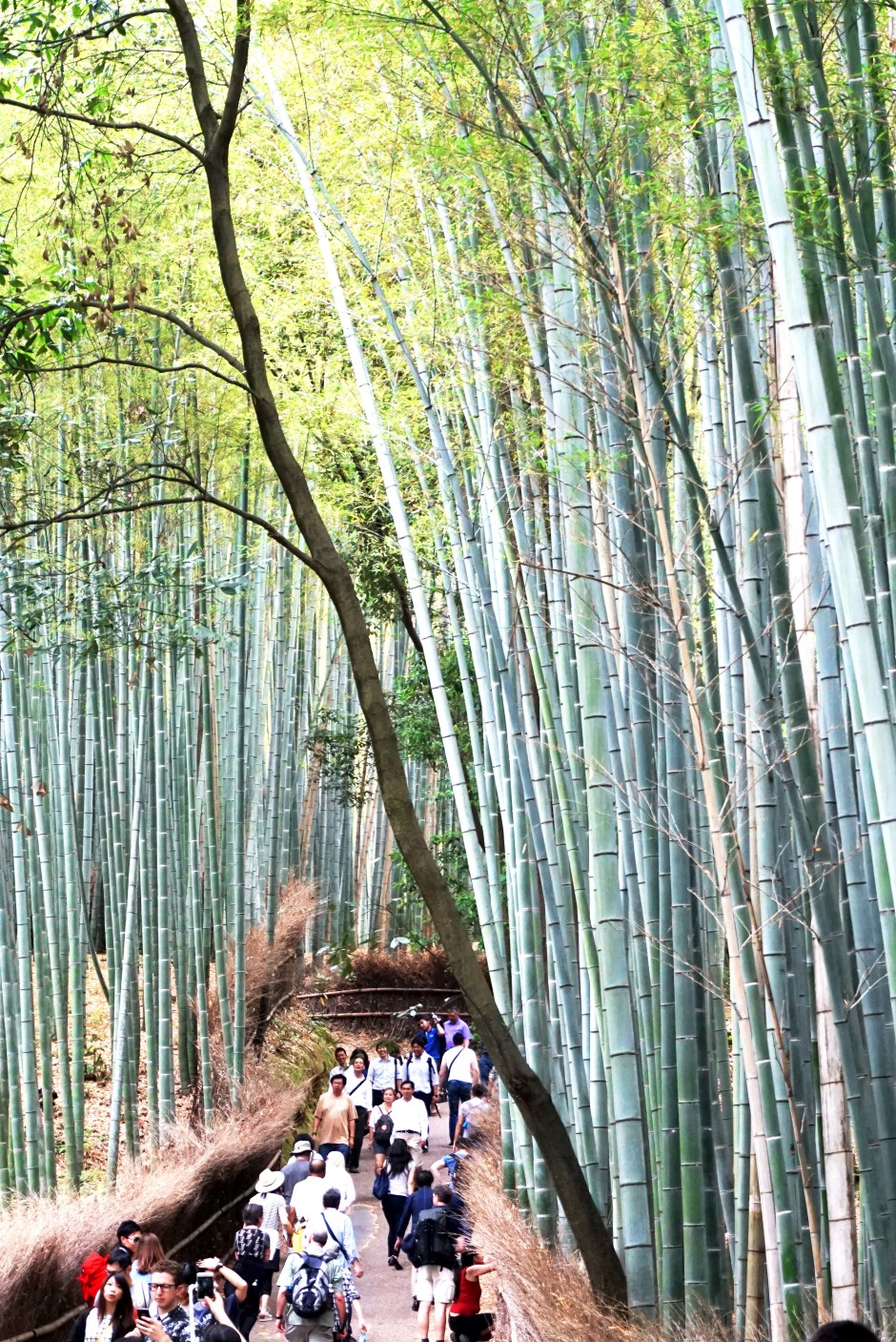 Bambool Trail