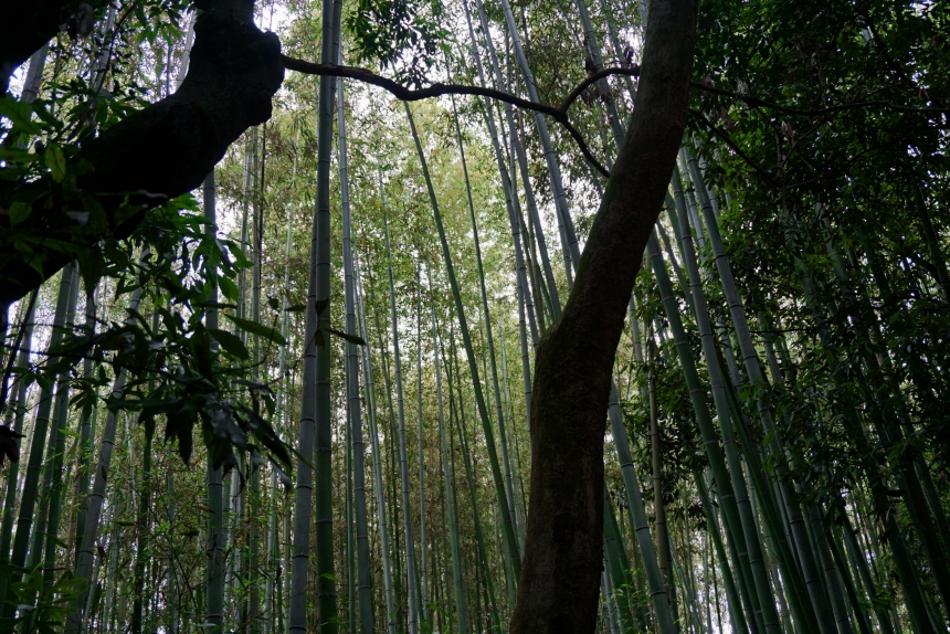 From Green to Black - Under the Bamboo
