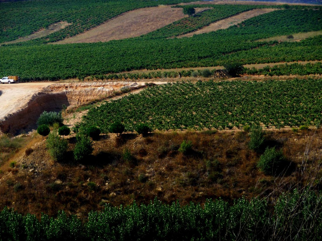 The Vineyards of Rioja viewed from above