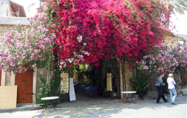 flowers-in-Limassol X