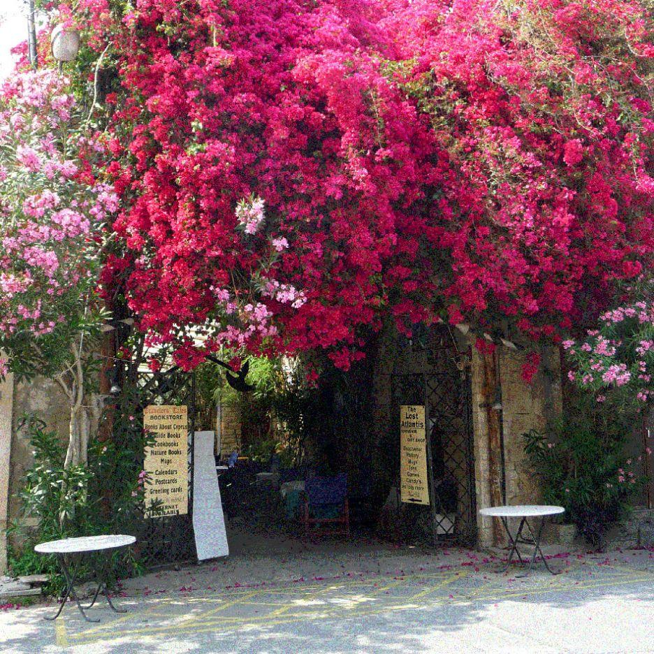 flowers-in-Limassol X